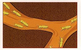 Prokill Termite And Pest Control Company